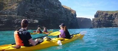 Seaweek - Pohatu Penguins Sea-Kayaking Safari