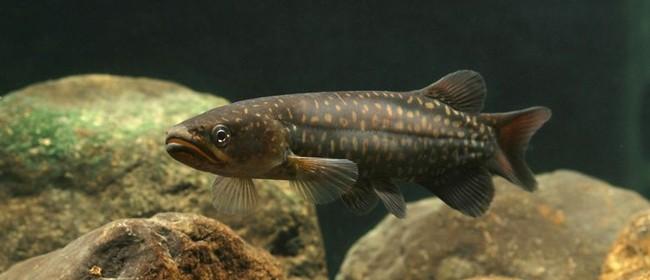 Native Fish n' Chips - Parks Week