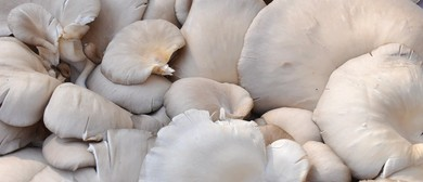 Local Food Week - The World Is Your Oyster (Mushroom)