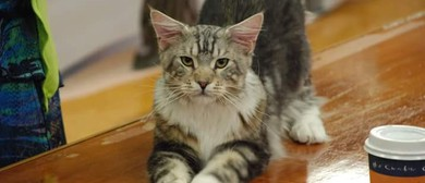 Canterbury All Breeds Cat Club Show