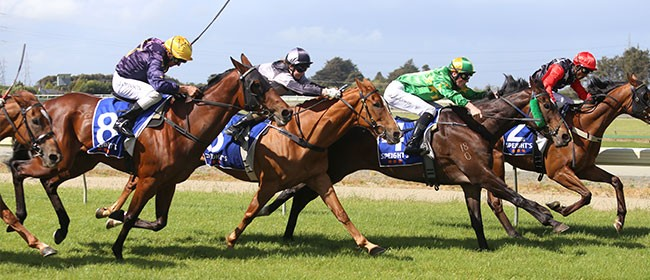 Gisborne Summer Races