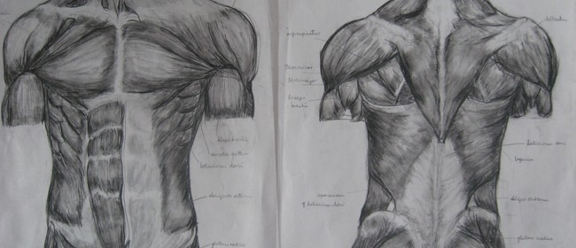 Drawing Salon - Anatomy for Artists