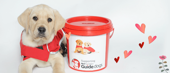 Blind Foundation Red Puppy Appeal
