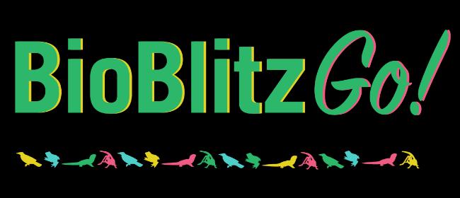 'BioBlitzGo!' with Ruud 'the Bugman' Kleinpaste