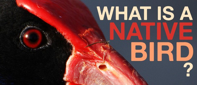 What Is a Native Bird?