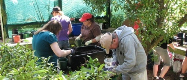 SEA Plant Nursery Open Days and Guided Walks - Parks Week