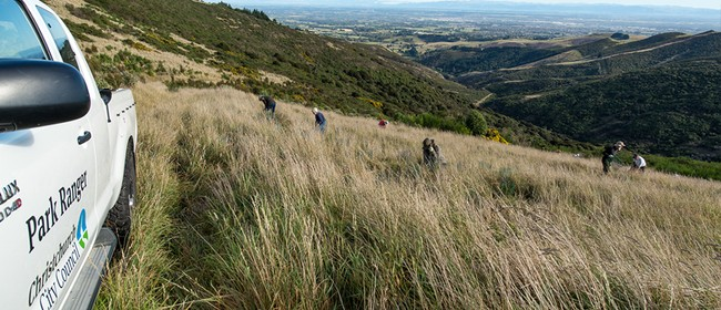 Port Hills Volunteer Restoration Planting
