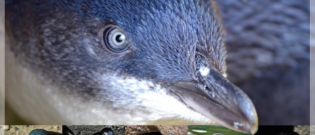 Blue Penguins Pukekura Exhibit