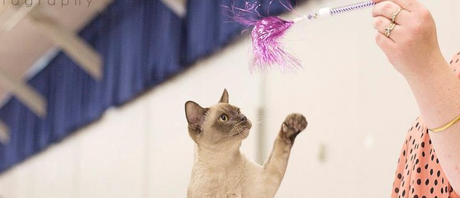 Burmese Cat Club of NZ - Shorthair Cat Show