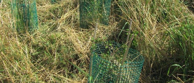 Port Hills Volunteering - Cage-making
