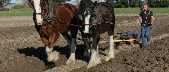 Ploughing Competition – Vintage, Horses and Silver Plough