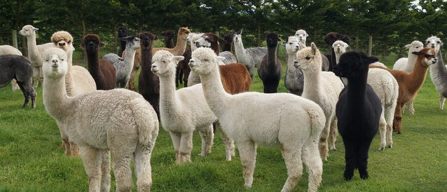 NZ National Alpaca Day Open Weekend