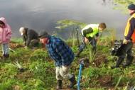 Karamu Stream Planting Day