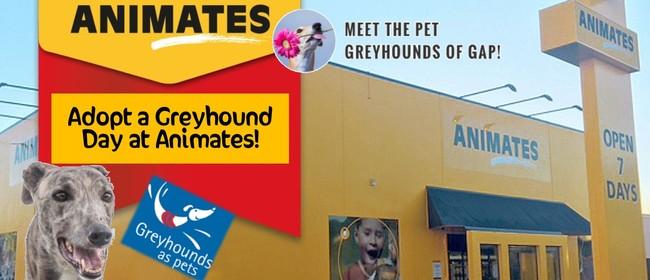 Adopt a Greyhound Day - Kaiwharawhara