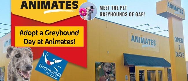 Adopt a Greyhound Day - Palmerston North