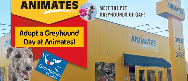Adopt a Greyhound Day - New Plymouth