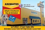 Adopt a Greyhound Day - Lower Hutt