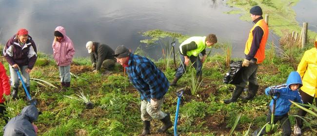 Pakowhai Regional Park Community Planting Day