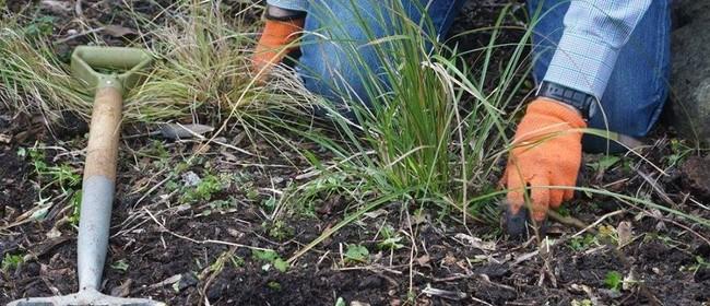 Trelissick Park Tree Planting 2017
