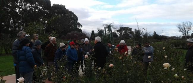Rose Pruning Demonstration