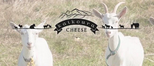 Kaikoura Cheese Tasting