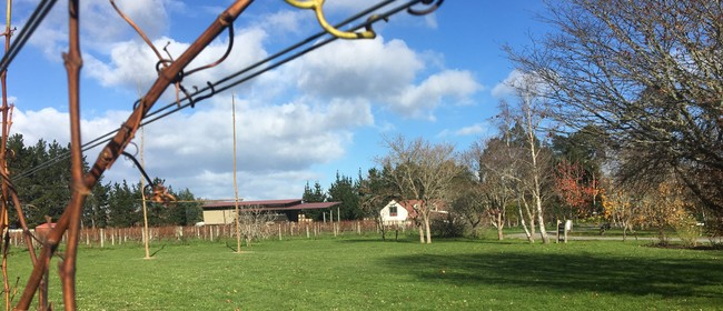 Winery Tours and Tastings