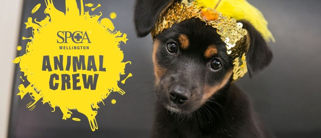 Wellington SPCA July Animal Camp