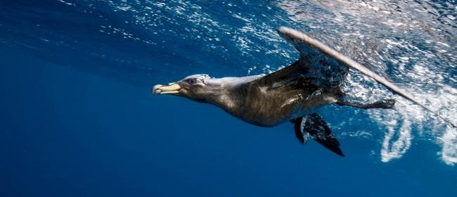 2017 Hauraki Gulf Marine Park Seminar: Taking Flight