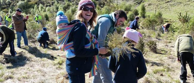 Whakaipo Bay Community Planting Day