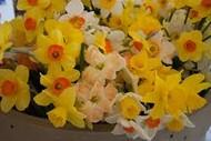 Hutt Valley Horticultural Society Spring Show