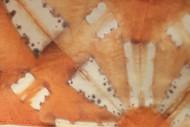Shibori/Natural Dye Workshop