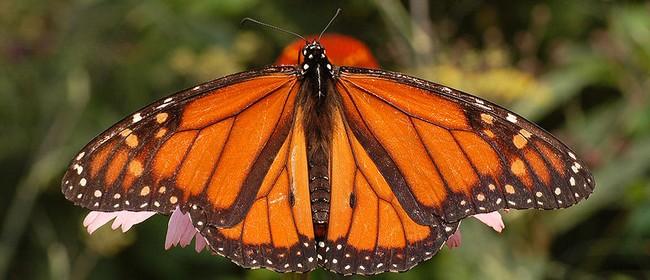 West Lynn Gardens & Butterfly House