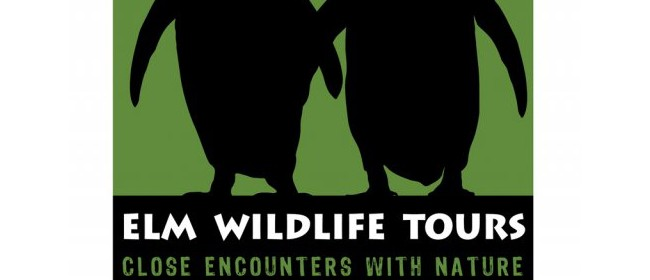 Elm Wildlife Tours