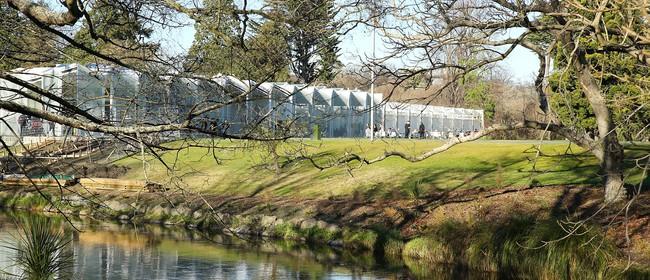 ilex Botanic Gardens